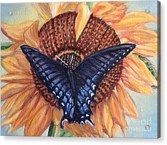 Butterfly Sunday Up-close Acrylic Print by Kimberlee Baxter