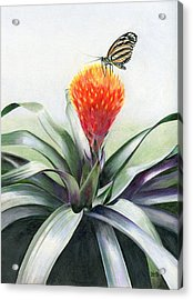 Butterfly Sunning In Costa Rica Acrylic Print
