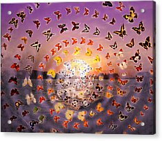 Butterfly Sunset Acrylic Print