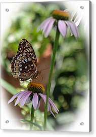 Butterfly Time Acrylic Print by Karen McKenzie McAdoo
