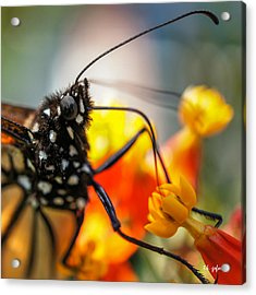 Acrylic Print featuring the photograph Butterfly Tongue Squared by TK Goforth