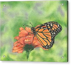 Acrylic Print featuring the drawing Butterfly by Troy Levesque