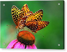 Acrylic Print featuring the photograph Butterfly Twins by Christina Rollo