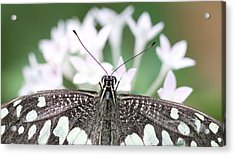 Butterfly View Acrylic Print