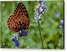 Butterfly Visit Acrylic Print
