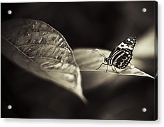 Butterfly Warm Tone Acrylic Print