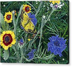 Butterfly Wildflowers Spring Time Garden Floral Oil Painting Green Yellow Acrylic Print by Walt Curlee
