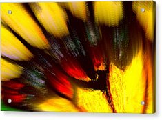 Butterfly Wing Pastel Acrylic Print by Antonia Citrino