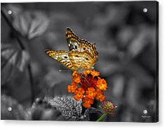 Butterfly Wings Of Sun Light Selective Coloring Black And White Digital Art Acrylic Print by Thomas Woolworth