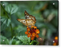 Acrylic Print featuring the photograph Butterfly Wings Of Sun Light by Thomas Woolworth