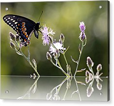Acrylic Print featuring the photograph Butterfly With Reflection by Eleanor Abramson