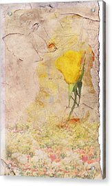 Butterfly Woman Acrylic Print by Juli Cromer