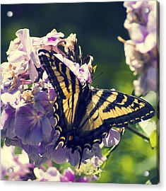 Acrylic Print featuring the photograph Butterfly by Yulia Kazansky