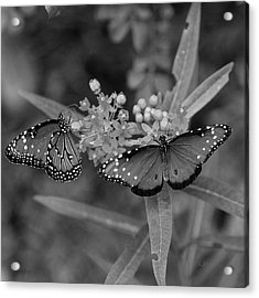 Acrylic Print featuring the photograph Butterflys by Joseph G Holland