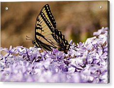Butterfy On Flowers Acrylic Print