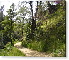 Buttermilk Trail South Yuba Acrylic Print by Rachel Lowry