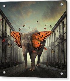 Butterphant Acrylic Print by Hardibudi
