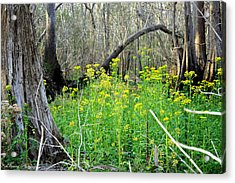 Butterweed Florida Wildflower Acrylic Print by Debra Forand