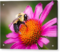 Buzzed In Eureka Springs Acrylic Print