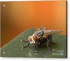 Buzzzzzzz  Acrylic Print
