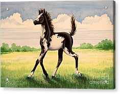Bw Painted Foal Acrylic Print