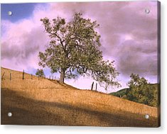 By The Big Oak Acrylic Print by Tom Wooldridge