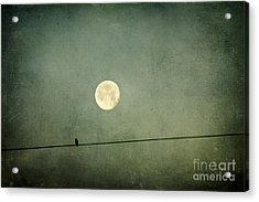 By The Light Of The Moon Acrylic Print by Joan McCool