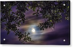 By The Moonlight Acrylic Print
