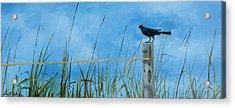Bye Bye Black Bird Acrylic Print