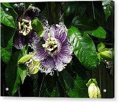 Acrylic Print featuring the photograph Byron Beauty by Ron Davidson