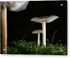 C Ribet Mushroom And Fungi Art Pearl Acrylic Print by C Ribet
