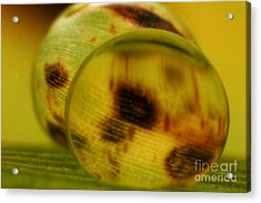 C Ribet Orbscape 0847 Acrylic Print by C Ribet