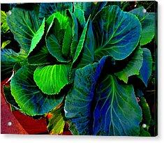 Cabbage Gone Wild Acrylic Print by Susan Duda