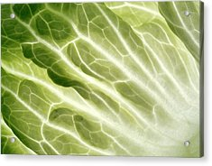 Cabbage Leaf Veins Acrylic Print by Uk Crown Copyright Courtesy Of Fera/science Photo Library
