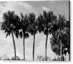 Cabbage Palm Trees Acrylic Print