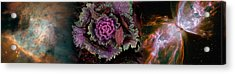 Cabbage With Butterfly Nebula Acrylic Print by Panoramic Images