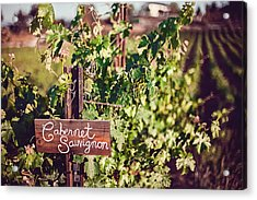 Cabernet Vineyards Acrylic Print