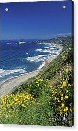 Cachagua Coastline Chile Acrylic Print
