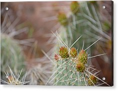 Cacti In Moab Acrylic Print by Kyle Reynolds