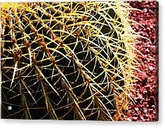 Cactus 10 Acrylic Print