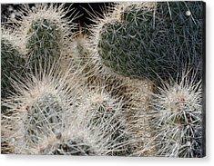 Cactus 11 Acrylic Print