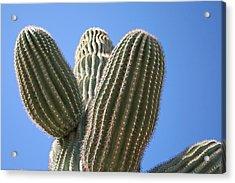 Cactus 16 Acrylic Print