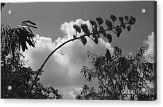 Acrylic Print featuring the photograph Cactus And Cloud by Kenny Glotfelty