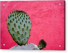 Cactus And Pink Wall Acrylic Print