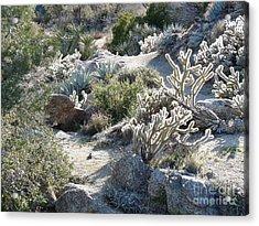 Cactus And Rocks Acrylic Print by Deborah Smolinske