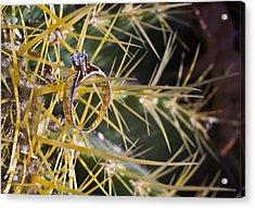 Cactus And Wedding Ring 3 Acrylic Print by Douglas Barnett