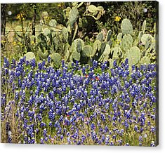 Cactus And Wild Flowers Acrylic Print