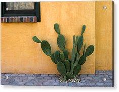 Cactus And Yellow Wall Acrylic Print by Carol Leigh