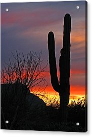 Cactus At Sunset Acrylic Print