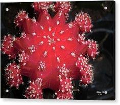 Cactus Beauty  Acrylic Print
